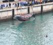 深圳搁浅抹香鲸确认死亡 已被打捞上岸