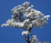 雪后黄柏山